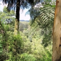 a-glimpse-of-the-ranges-through-dense-forest-along-the-park-to-park-walk