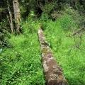 a-log-lies-on-a-carpet-of-lush-greenery-road-31