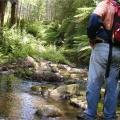 billys-creek-crossing