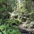 billys-creek-wilderness