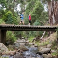bird-road-bridge-macks-creek-darryl-whitaker-djwtv