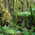 blackwood-forest-and-mosses-duff-trail