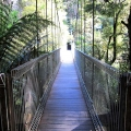 corrigans-suspension-bridge-tarra-bulga-national-park-balook