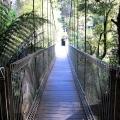 corrigans-suspension-bridge-tarra-bulga-national-park-balook