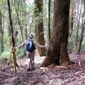 descent-to-tarra-valley-west-of-picnic-area