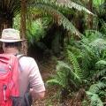 exploring-duff-trail