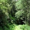 ferns-and-tall-forest-road-31