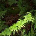 ground-ferns-morwell-national-park