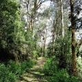 leafy-walk-road-31