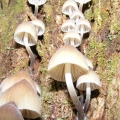 many-species-of-fungi-thrive-april-may-is-the-peak-season