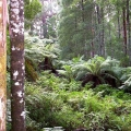 regrowth-forest-along-duff-trail