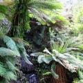 rocky-cascade-amongst-tree-ferns-road-31