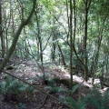 strzelecki-warm-temperate-rainforest-macks-creek