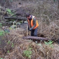 strzelecki-warm-temperate-rainforest-restoration-project-macks-creek-2009