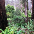 tall-timber-tarra-bulga-national-park-balook