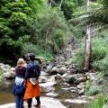 the-rugged-terrain-and-rainforest-of-macks-creek
